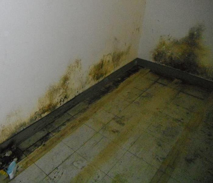 Remodeling woes - Mold.