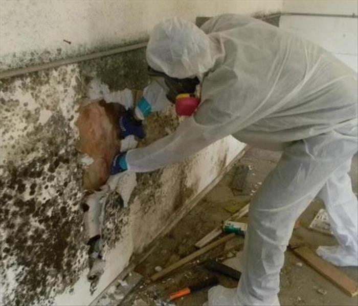 Mold Remediation Were you gone for the summer?