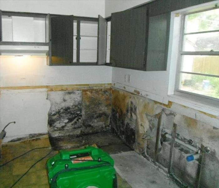 Mold Remediation As a homeowner, know your enemy... mold!
