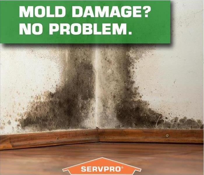 Mold Remediation Where to begin when you suspect you have mold.